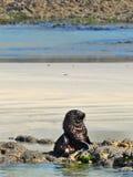 L?st behandla som ett barn skyddsremsan som tr?ttas av att spela med dess Sibblings p? den Wharariki stranden, Nya Zeeland arkivbilder