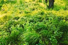 Löst gräs för grön sommar inget royaltyfria bilder