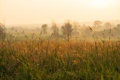 Löst gräs i morgonsoluppgången Arkivfoton