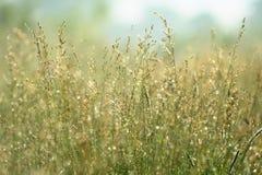 Löst gräs i soligt väder Arkivbilder