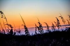 Löst gräs i sommarsolnedgången Royaltyfria Foton