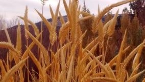 Löst gräs växer Arkivfoto