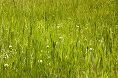 Löst grasland Royaltyfri Fotografi