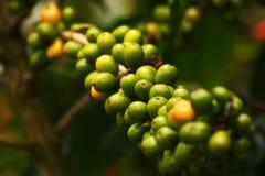 Löst kaffe Royaltyfria Bilder
