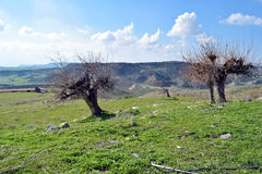 Löst landskap i Cypern Royaltyfri Foto