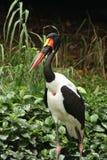 Löst liv för stork Arkivfoton