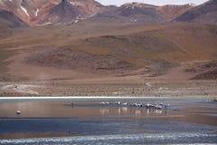 Löst naturlandskap i bolivianska Anderna Royaltyfri Foto