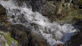 Löst naturligt av klart, rent strömvatten för kristall från den alpina floden på solig dag lager videofilmer