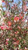 Löst steg blommor i buske arkivfoton