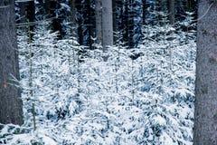 Löst trä i snö Royaltyfria Foton