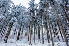 Löst trä i snö Royaltyfri Foto