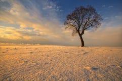 Löst träd i vinter på inställningssolen Royaltyfri Bild
