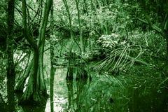 Löst tropiskt skoglandskap, mangroveträd, gräsplan arkivbilder