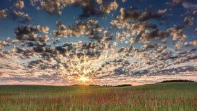 Löst vallmofält och tidschackningsperiod för molnig himmel arkivfilmer