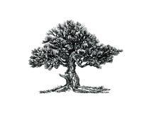 Lövfällande bonsai Den naturliga formen, den östliga gåtan Arkivbilder