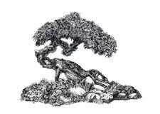 Lövfällande bonsai Den naturliga formen, den östliga gåtan Royaltyfri Bild