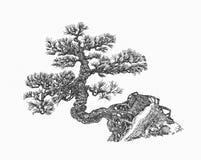 Lövfällande bonsai Den naturliga formen, den östliga gåtan royaltyfri fotografi