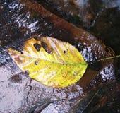 Lövfällande sidor tvättade sig bort buret av vattenströmmar arkivfoto