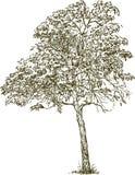 Lövfällande träd