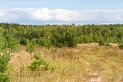 Lövfällande träd för höstlandskap Klimax stabilt ekosystem, renhet av naturen, Sumy region, Ukraina, netto område hållbart fotografering för bildbyråer