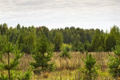 Lövfällande träd för höstlandskap Klimax stabilt ekosystem, renhet av naturen, Sumy region, Ukraina, netto område hållbart arkivbilder
