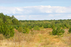Lövfällande träd för höstlandskap Klimax stabilt ekosystem, renhet av naturen, Sumy region, Ukraina, netto område hållbart royaltyfria bilder