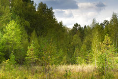 Lövfällande träd för höstlandskap Klimax stabilt ekosystem, renhet av naturen, Sumy region, Ukraina, netto område hållbart royaltyfri foto