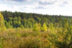 Lövfällande träd för höstlandskap Klimax stabilt ekosystem, renhet av naturen, Sumy region, Ukraina, netto område hållbart royaltyfri fotografi