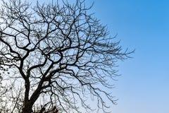 Lövfällande träd i höstsäsong i benäget område för torka tack vare mycket mindre nederbörd trädet har utgjutit dess sidor och vän royaltyfria bilder