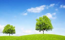 Lövfällande träd på den gröna kullen royaltyfria foton