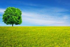 Lövfällande träd på grön äng royaltyfria bilder