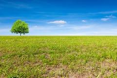 Lövfällande träd på grön äng royaltyfria foton