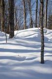 Lövfällande träd som gjuter blått, skuggar i snön Arkivbilder