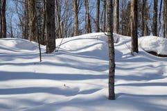 Lövfällande träd som gjuter blått, skuggar i snön Royaltyfri Bild
