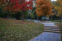 Lövrik färgrik trädgård arkivfoto
