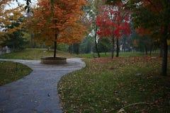 Lövrik färgrik trädgård i Tsinghua arkivfoton