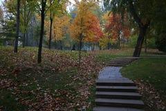 Lövrik färgrik trädgård på nedgången royaltyfri fotografi