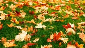 Lövrik gräsmatta Royaltyfria Bilder