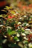 Lövrik grön växt Royaltyfria Bilder
