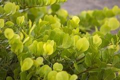 Lövrik grön växt med vattensmå droppar från en regnstorm Royaltyfria Bilder