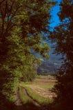 Lövrik skog med det gröna fältet och alpint landskap arkivfoton