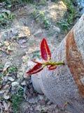 lövrik tree Arkivfoto