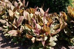 Lövrika gräsplan- och lilablommor royaltyfria foton