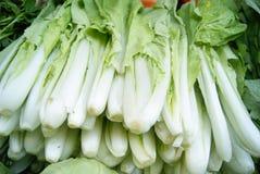 Lövrika grönsaker Royaltyfri Fotografi