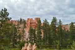 Lövrika skogar av sörjer och granar i Bryce Canyon Formations Of Hodes geologi royaltyfri fotografi