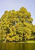 lövrika trees för lake royaltyfria bilder
