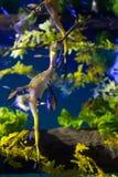lövrikt hav för drake Royaltyfri Foto