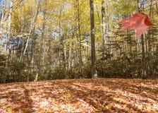 Lövrikt skoggolv och fallande blad Arkivfoto
