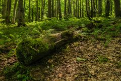 Lövruska av träd som täckas med mossa i skogen arkivbild