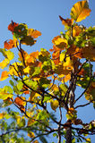 Lövskog i droughsäsong Royaltyfri Fotografi